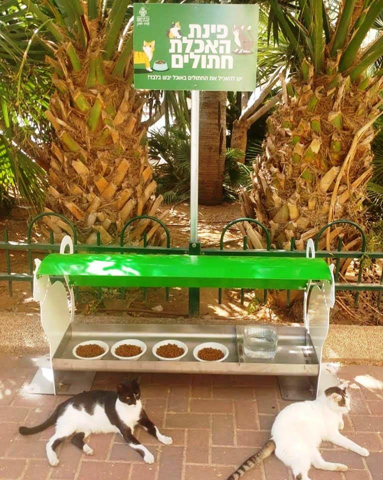 חדש ברעננה: עמדות האכלת חתולים!