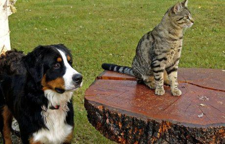 צרכנות נבונה – קונים אונליין גם עבור בעלי החיים שלנו